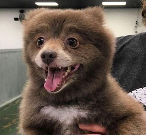 Bức ảnh về con vật nửa gấu nửa chó. (Ảnh: Internet)