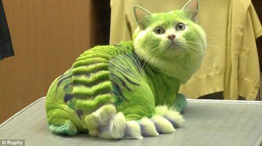 Em mèo này hẳn sẽ đạt giải bộ lông rồng ấn tượng nhất cho xem. (Ảnh: Internet)