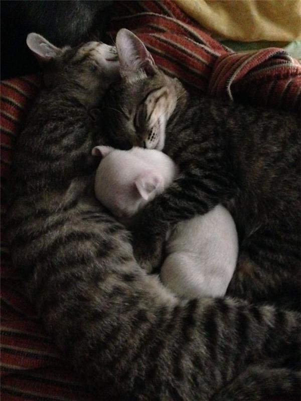 """Đó là hai chú mèo mướp """"không quen không biết""""... (Ảnh: Internet)"""