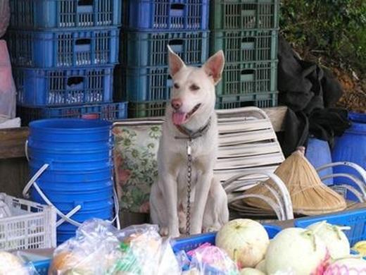 Khách đến mua trái cây thấy chú chó trông quầyđều cảm thấy rất ngạc nhiên. (Nguồn Internet)