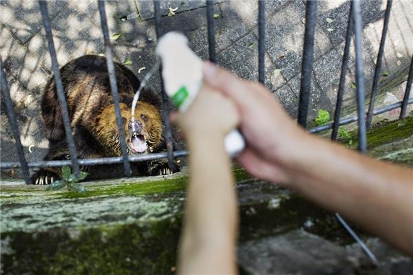 Con người rồi sẽ hiểu cảm giác tù túng, mất tự do, khó chịu và hoảng sợ của những con thú khi đứng sau song sắt sở thú gần như cả cuộc đời. (Ảnh: Internet)