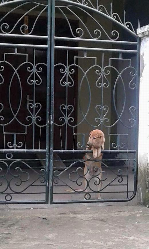 """Từ sáng sớm, tôiđã chuẩn bị sẵn sàng """"tấn cônghoa hậu khu phố""""... (Ảnh: Internet)"""