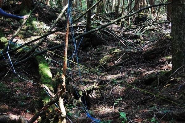 Băng dính quấn quanh cành cây dọc đường để tránh bị lạc.