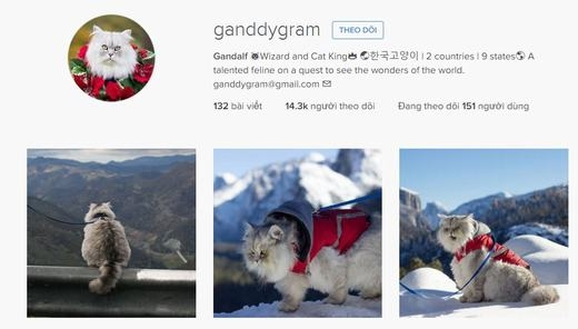 Gandalf được rất nhiều người hâm mộ. (Ảnh: chụp màn hình)