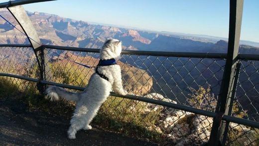 """Được người chủ ví là """"chú mèo mộng mơ"""", Gandalfrất thích chiêm ngưỡng cảnh đẹp, thích đi du lịch và khám phá. (Ảnh: Instagram)"""