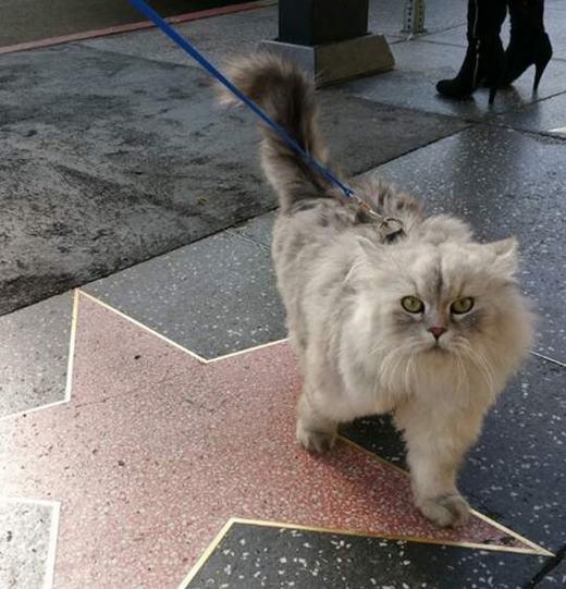 Những nơi Gandalfđặt chân tới rất nhiều, như đại lộ ngôi sao Hollywood này chẳng hạn. (Ảnh: Instagram)