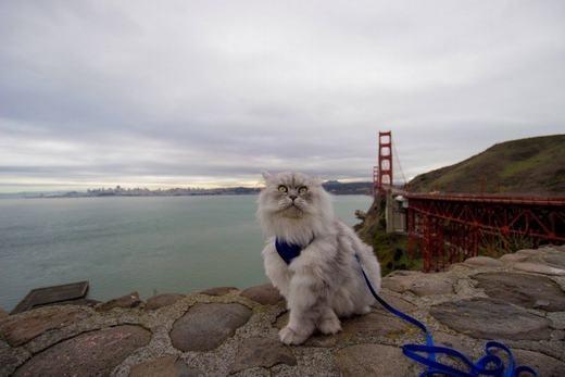 Tạo dáng bắt chéo chân trên cầu Cổng Vàng - cây cầu nổi tiếng nước Mỹ, nằm ở vịnh San Francisco. (Ảnh: Instagram)