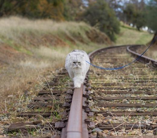 Sải bước trên đường ray xe lửa ở miền tây nước Mỹ. (Ảnh: Instagram)