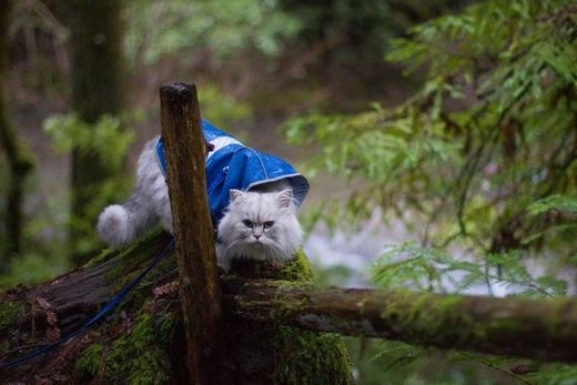 ...hay mạo hiểm trên vách núi trong vườn quốc gia Redwoods. (Ảnh: Instagram)