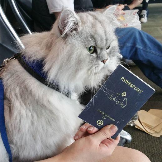 Để sẵn sàngcho điều này, Gandalfthậm chí đã được người chủ chuẩn bị hộ chiếu. (Ảnh: Instagram)