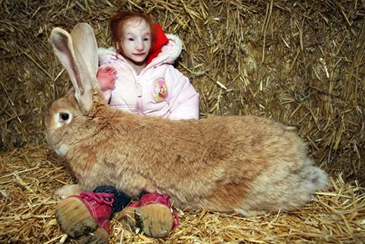 Charlotte bên cạnh chú thỏ khổng lồ của mình (Ảnh: Barcroft)