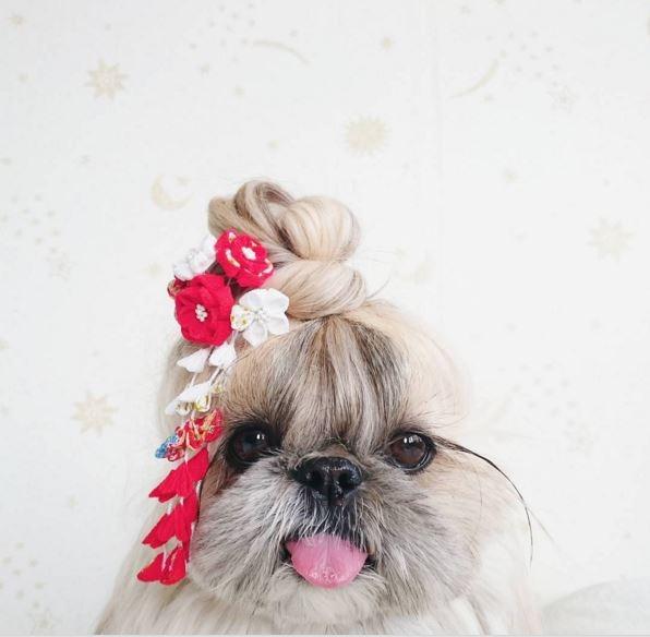 Cô chó điệu đà với tóc trái tim đẹp không kém siêu mẫu nổi tiếng