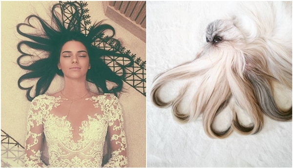 """Sao chép lại kiểu tóc trái tim trong bức ảnh """"hot"""" nhất Instagram năm 2015 của siêu mẫu Kendall Jenner đã giúp lượt người theo dõitrang cá nhân của Kuma tăng đột biến. (Ảnh: Internet)"""