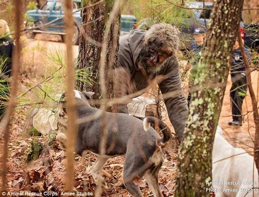 Hầu hết bọn chó đều khỏe mạnh, dù vậy một số con bị kísinh trùng, gãy răng và bị thương. (Ảnh: Daily Mail)