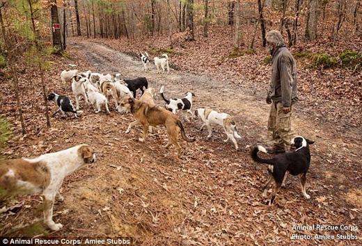 Chính ông đã tự nguyện giao nộp lại bầy chó để chúng được chăm sóc đầy đủ. (Ảnh: Daily Mail)