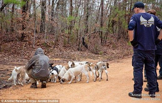 Người đàn ông gần đây đã đổ bệnh, tuy nhiên từ chối nhận chăm sóc y tế cho đến khi bọn chó được an toàn. (Ảnh: Daily Mail)