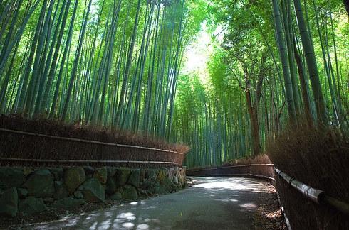Lối đi quanh co giữa rừng (Ảnh: Internet)