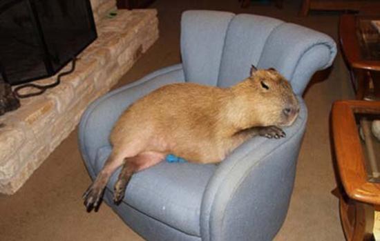 Gary được ngồi trên ghế sa lông. (Ảnh: Internet)  Và được bơi trong hồ bơi gia đình. (Ảnh: Internet)