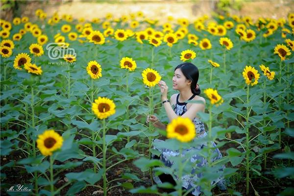 Thiếu nữ khoe vẻ đẹp rạng ngời giữa sắc hoa rực rỡ.
