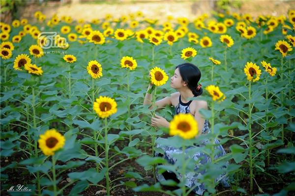 Xem thêm những hình ảnh của các bạn trẻ bên vườn hoa hướng dương: