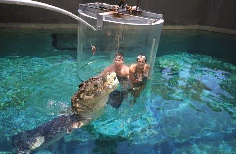 Du khách sẽ vào trong một bể chứa trong suốt cao gần 3m, làm từ chất liệu acrylic dày 15,5cm, được bịt kín rồi thả vào trong hồ nuôi cá sấu.(Ảnh: Internet)