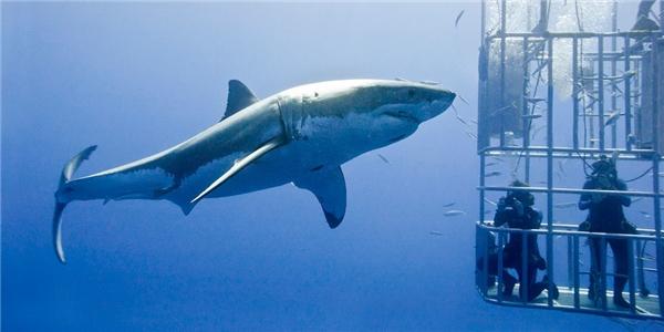 Du khách không cần phải biết lặn sâu vẫncó thể tham gia trải nghiệm mạo hiểm này.(Ảnh: Internet)