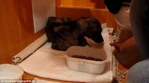 Họ cách li Billy khỏi những con thú khác, cho chú nằm trong nhà tắm. (Ảnh: Daily Mail)