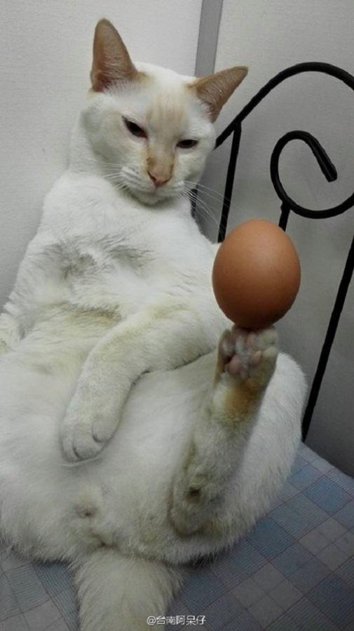 Giữ cho quả trứng đứng vững chỉ với một... chân. (Ảnh: Internet)