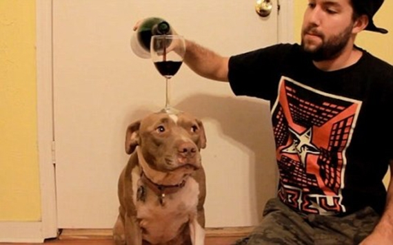Cùng thú cưng uống rượu cũng rất vui. (Ảnh: Internet)