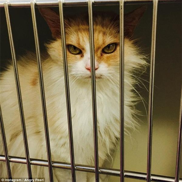 Will và bạn gái tìm thấy chú mèo 6 tuổi này tại trang mạngcủa trung tâm dịch vụ chăm sóc và bảo vệ động vật.(Ảnh: Instagram)