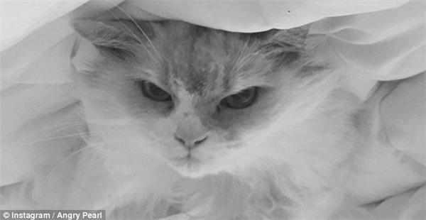 """Dựa vào những bức ảnh chế của mèo Pearl do Will thực hiện, chú mèo này rất ghét thứ Hai và thích ra lệnh cho những con người """"vừa dơ, vừa xấu, vừa vô dụng"""" sống quanh mình.(Ảnh: Instagram)"""
