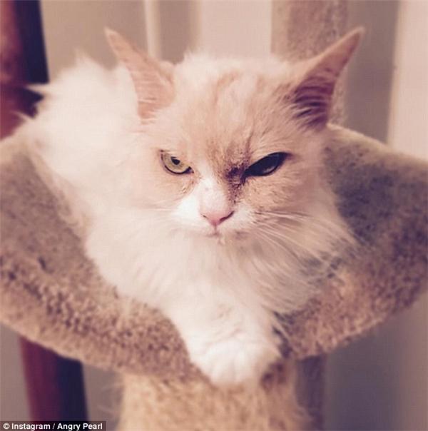Đằng sau vẻ mặt cau có là một chú mèo với trái tim ấm áp, rất thích được chủ cưng nựng.(Ảnh: Instagram)