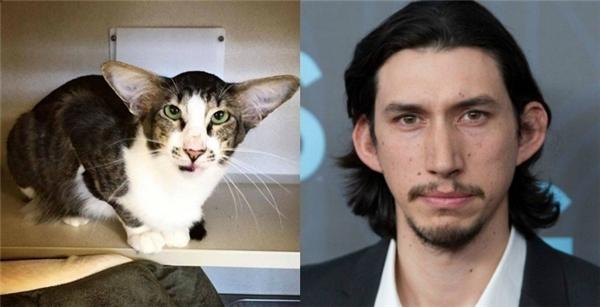 Mèo Catlo Ren giống Adam đến kì lạ...(Ảnh: Distractify)