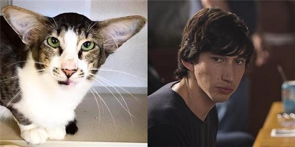 Ngay sau khi hình ảnh của chú mèo này lan truyền trên mạng xã hội, đã có người nhận nuôi chú từHội phòng chống ngược đãi thú vật ở quận Monmouth, New Jersey. (Ảnh: Distractify)