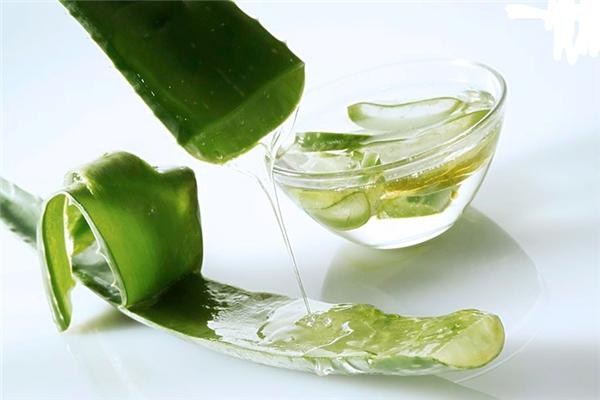 Chất nhựa trong nha đam có khả năng gây tê, tính sát khuẩn cao, có tác dụng sát trùng và thanh nhiệt.(Ảnh: Internet)