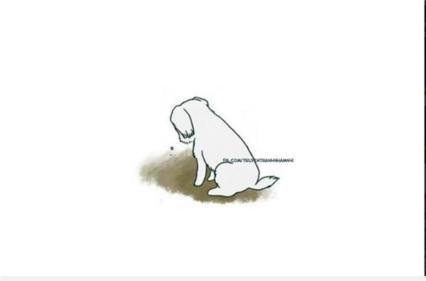 """Rơi nước mắt trước lời xin lỗi của chú chó vì """"lỡ lớn"""""""
