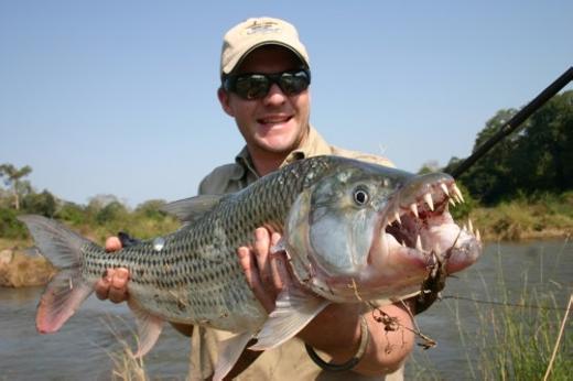 Cá hổ (Tiger Fish) khiến nhiều người kinh sợ với hàm răng sắc nhọn như ác quỷ. Với hàm răng này, con mồi của chúng sẽ bị kết liễu chỉ với 1 cú đớp. Một trong những loài cá hổ nổi tiếng nhất là cá hổ Goliath với trọng lượng lên tới 70kg. (Ảnh: Internet)