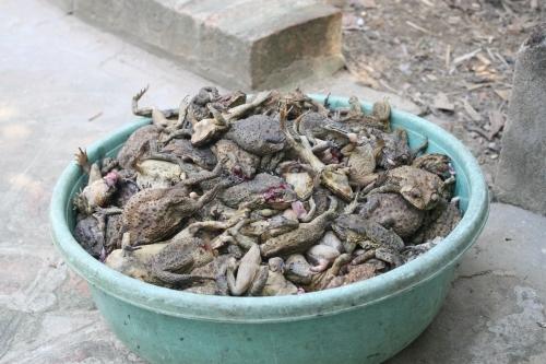 Thức ăn của rắn. Ảnh Hồng Hà