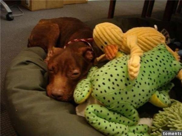Patrick cuối cùng cũng được một gia đình nhận nuôi và sống cuộc sống hạnh phúc. (Ảnh: Internet)