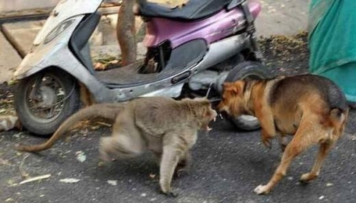 Bảo vệ chócon mọi lúc mọi nơi, sẵn sàng đánh trả nếu có thể... (Ảnh: Internet)
