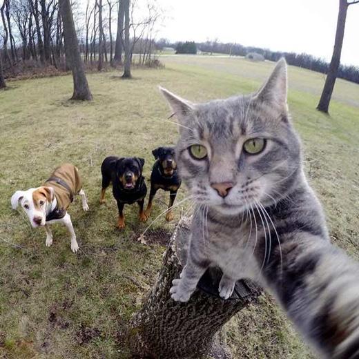 ... và thường rủ cácbạn chó chụp cùng. (Ảnh: buzzfeed)