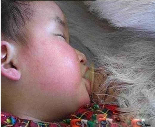 Em bé bú sữa dê ngon lành. (Ảnh: letu)