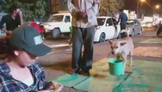 Bất ngờ đằng sau chuyện chú chó xách xô ăn xin khắp Sài Gòn cùng chủ