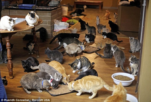 Họ phải thức dậy từ 4 giờ sáng để cho chúng ăn và chăm sóc y tế. (Ảnh: Daily Mail)