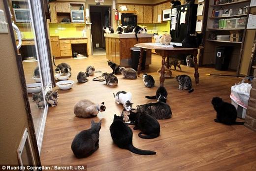 Dù rất yêu mèo nhưng Lattanzio cho biết mục tiêu của bà vẫn là tìm chủ mới cho chúng. (Ảnh: Daily Mail)