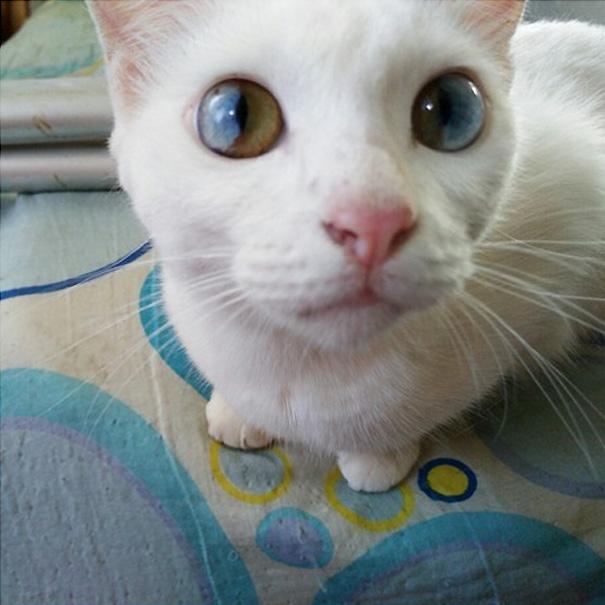 Thực chất đây là hội chứngloạn sắc tố mống mắt.(Ảnh: Bored Panda)