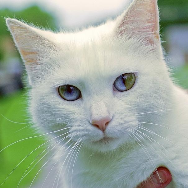 Độc đáo những em mèo mang cả vũ trụ trong đôi mắt