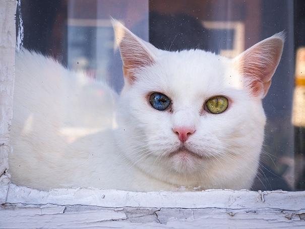 Thật khó cưỡng lại sức hấp dẫn của những đôi mắt nhiều màu sắc huyền ả-oấy.(Ảnh: Bored Panda)