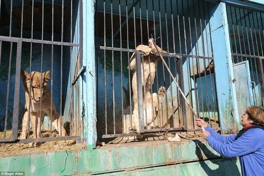 Bật khóc trước số phận đáng thương của những con thú bị bỏ quên