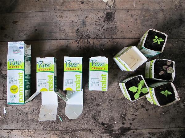 Những hộp sữa giấy cũng có thể tái sử dụng. (Ảnh: Internet)